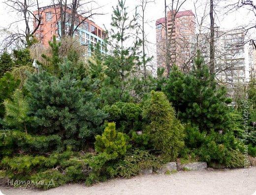 Всем доброге времени суток! Сегодня в Москву  вернулась ВЕСНА! А кроме того 24 апреля 23 года назад случилось рождение новой ячейки общества - НАША СЕМЬЯ! И такое событие мы решили отпраздновать походом в Аптекарский огород - место знаковое для меня, потому как я родилась недалеко, в Грохольском переулке, а в этом маленьком и жутко уютном парке мама меня выгуливала..... Сейчас в нем идет фестиваль весенних цветов! фото 26