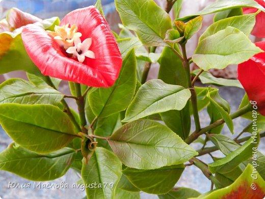 Давно приглядывалась к этому удивительному растению и вот решилась слепить. Как же трудно передать оказалось в фото этот сочный красно- алый цвет !  фото 3