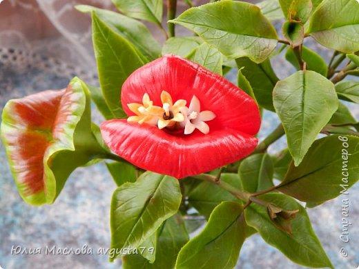 Давно приглядывалась к этому удивительному растению и вот решилась слепить. Как же трудно передать оказалось в фото этот сочный красно- алый цвет !  фото 4