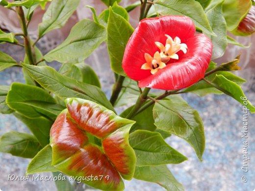 Давно приглядывалась к этому удивительному растению и вот решилась слепить. Как же трудно передать оказалось в фото этот сочный красно- алый цвет !  фото 5