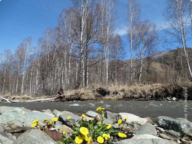 Добрый день всем! Сегодня мы отправимся на новую экскурсию по Горному Алтаю. фото 37