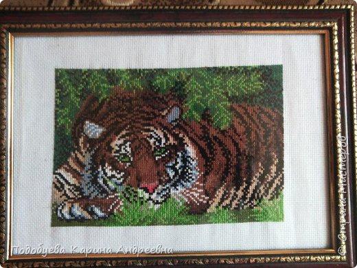 Тигр Вышивка крестом