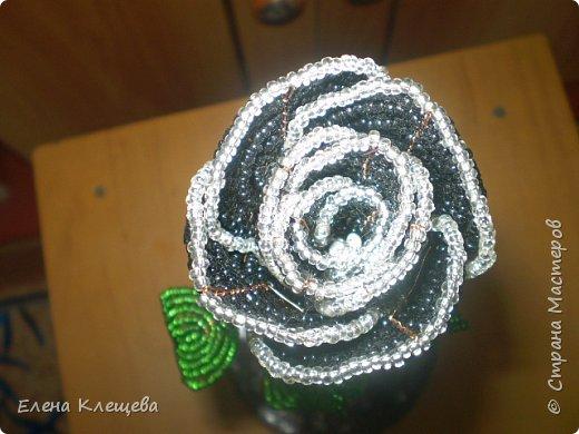 розы кустовые фото 9