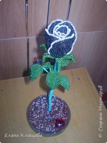 розы кустовые фото 10