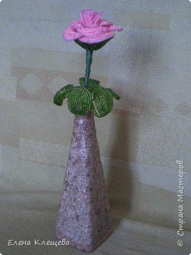 розы кустовые фото 11