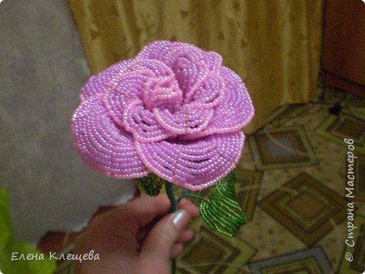 розы кустовые фото 12