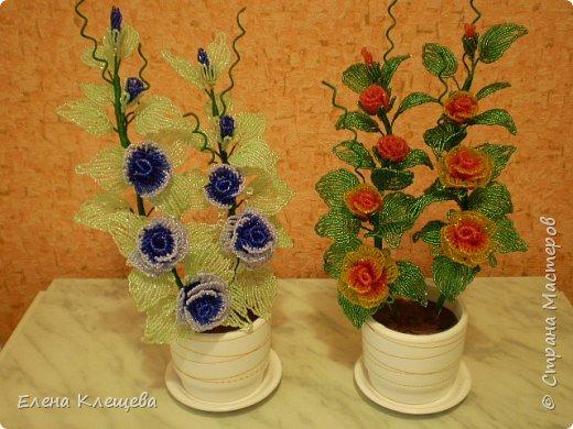 розы кустовые фото 1
