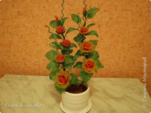 розы кустовые фото 2