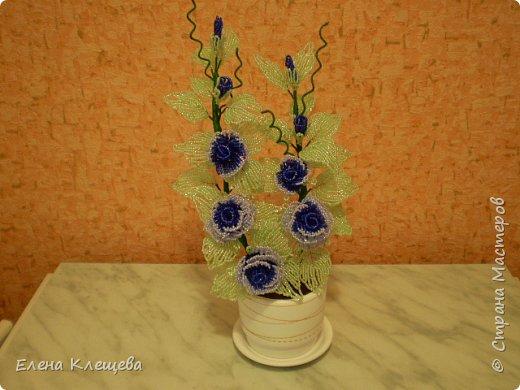 розы кустовые фото 3
