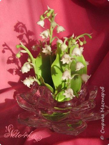 В преддверии цветения ландышей фото 1