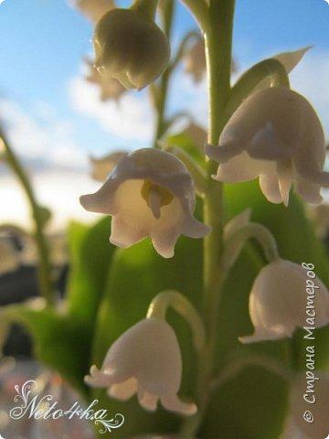 В преддверии цветения ландышей фото 5