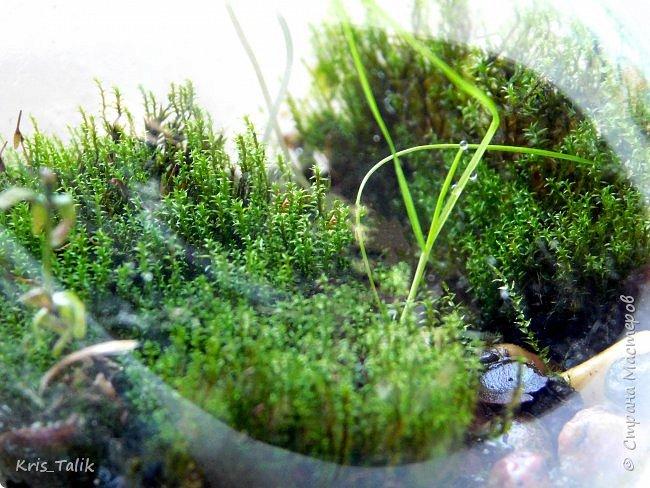 Ровно месяц назад я сделала маленький террариум и сейчас хочу вам показать, что изменилось в нём. Можно сразу заметить, что начали расти какие- то новые растения, а некоторые растения завяли и соответственно обогатили почву для роста других растений. фото 2