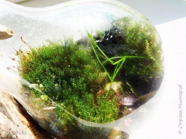 Ровно месяц назад я сделала маленький террариум и сейчас хочу вам показать, что изменилось в нём. Можно сразу заметить, что начали расти какие- то новые растения, а некоторые растения завяли и соответственно обогатили почву для роста других растений. фото 4