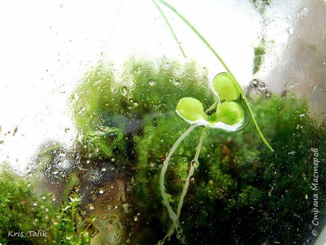 Ровно месяц назад я сделала маленький террариум и сейчас хочу вам показать, что изменилось в нём. Можно сразу заметить, что начали расти какие- то новые растения, а некоторые растения завяли и соответственно обогатили почву для роста других растений. фото 5