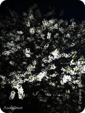 За окном весна.Что может быть прекрасней цветения тюльпанов. фото 31