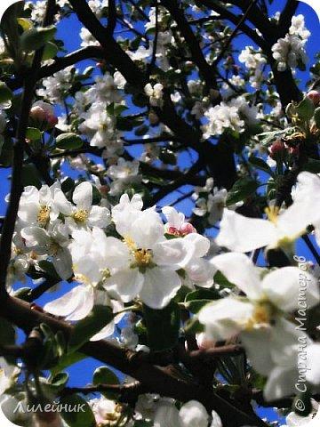 За окном весна.Что может быть прекрасней цветения тюльпанов. фото 33
