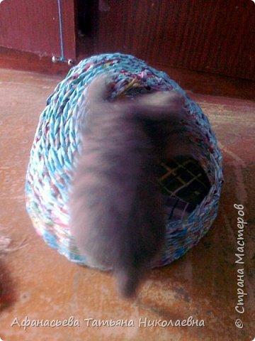 подарили котенка...такой балушка! Вот домик ему сплела.. фото 4