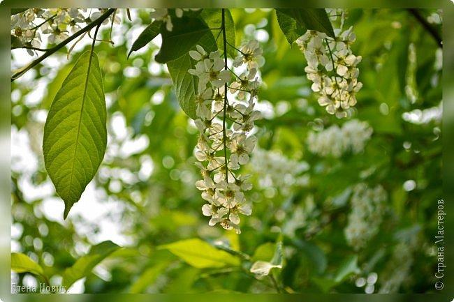Добрый день, жители Страны Мастеров.  Приглашаю вас полюбоваться весной на Амуре.  фото 5