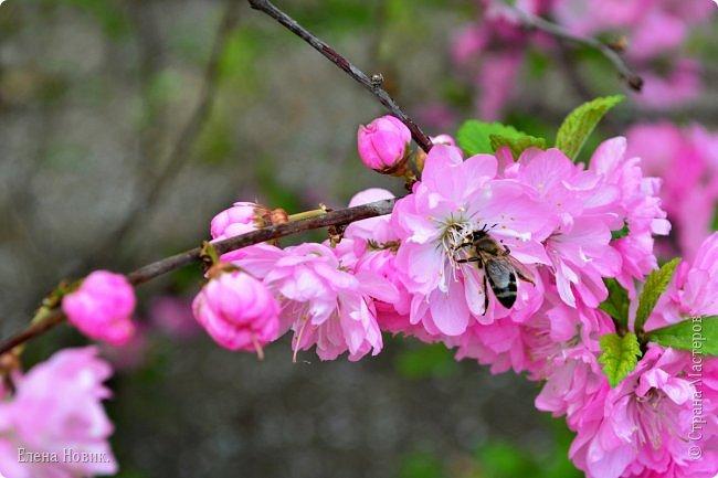 Добрый день, жители Страны Мастеров.  Приглашаю вас полюбоваться весной на Амуре.  фото 8