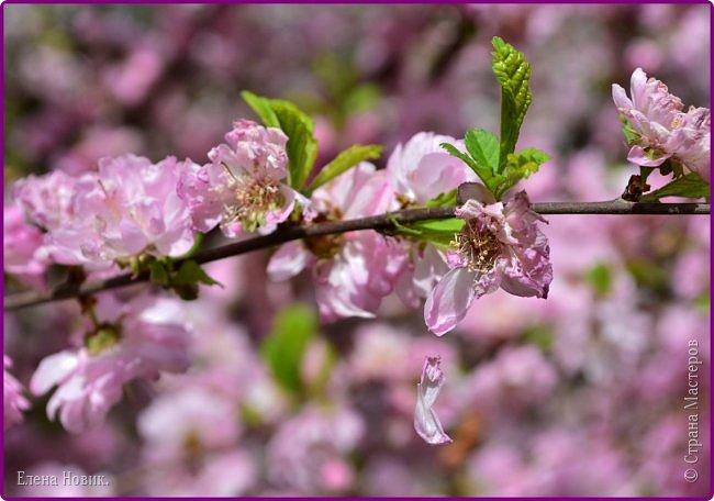 Добрый день, жители Страны Мастеров.  Приглашаю вас полюбоваться весной на Амуре.  фото 9