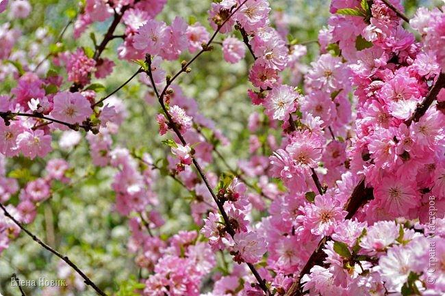 Добрый день, жители Страны Мастеров.  Приглашаю вас полюбоваться весной на Амуре.  фото 7