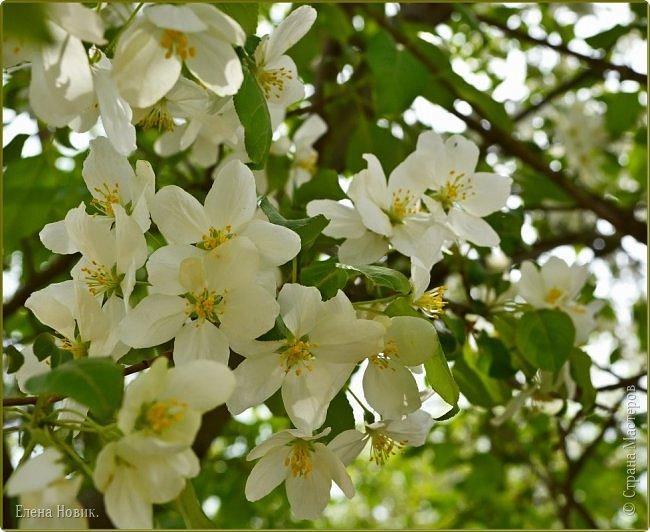 Добрый день, жители Страны Мастеров.  Приглашаю вас полюбоваться весной на Амуре.  фото 10