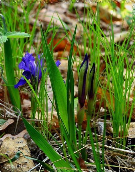 Добрый день, жители Страны Мастеров.  Приглашаю вас полюбоваться весной на Амуре.  фото 4
