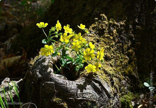 Добрый день, жители Страны Мастеров.  Приглашаю вас полюбоваться весной на Амуре.  фото 17
