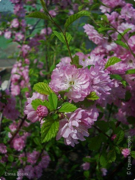 Добрый день, жители Страны Мастеров.  Приглашаю вас полюбоваться весной на Амуре.  фото 6