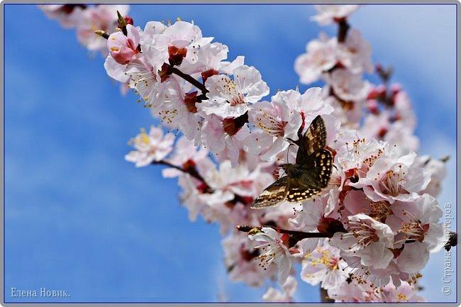 Добрый день, жители Страны Мастеров.  Приглашаю вас полюбоваться весной на Амуре.  фото 12