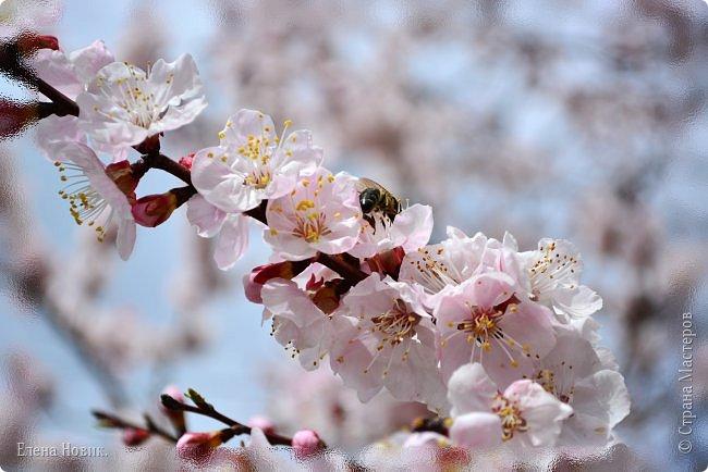 Добрый день, жители Страны Мастеров.  Приглашаю вас полюбоваться весной на Амуре.  фото 13