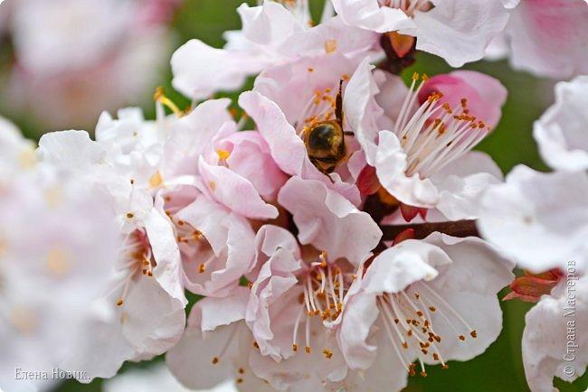 Добрый день, жители Страны Мастеров.  Приглашаю вас полюбоваться весной на Амуре.  фото 14