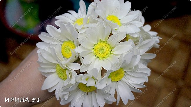 Здравствуйте! Выставляю на Ваш суд свои цветы из фома.  Без лишних слов, приглашаю  к просмотру.  Это моя финальная композиция Перезагрузки у своей новой хозяйки.  На фото замечательная представительница породы той-терьер Сашенька.  фото 5