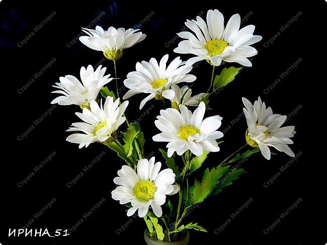 Здравствуйте! Выставляю на Ваш суд свои цветы из фома.  Без лишних слов, приглашаю  к просмотру.  Это моя финальная композиция Перезагрузки у своей новой хозяйки.  На фото замечательная представительница породы той-терьер Сашенька.  фото 3