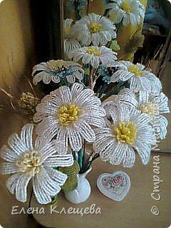 розы кустовые фото 18
