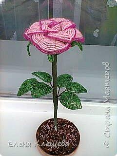 розы кустовые фото 17