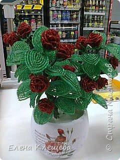 розы кустовые фото 16