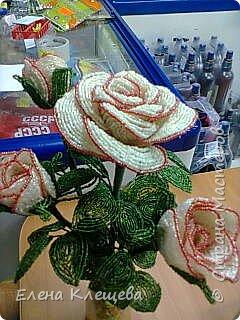 розы кустовые фото 15