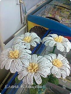 розы кустовые фото 14