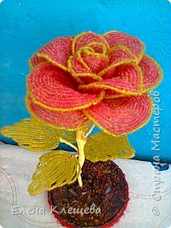 розы кустовые фото 13