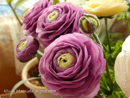 Ещё одни любимки - ранункулюсы. Фиолетовый цвет такой же капризный как и красный. При разном освещении - совершенно разные оттенки ! Поэтому фото много.  фото 3