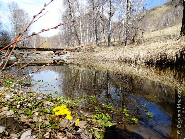 Это Иоанн Кронштадтский, святой праведник, сказал, что цветы – остатки рая на земле. И разве нельзя назвать райским местом этот родник в Бешпельтирском логу? У нас, в Горном Алтае, такая красота повсюду. И я приглашаю вас на неспешную прогулку по цветущему Алтаю. фото 30