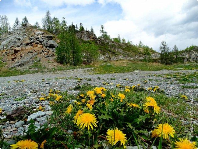Это Иоанн Кронштадтский, святой праведник, сказал, что цветы – остатки рая на земле. И разве нельзя назвать райским местом этот родник в Бешпельтирском логу? У нас, в Горном Алтае, такая красота повсюду. И я приглашаю вас на неспешную прогулку по цветущему Алтаю. фото 50