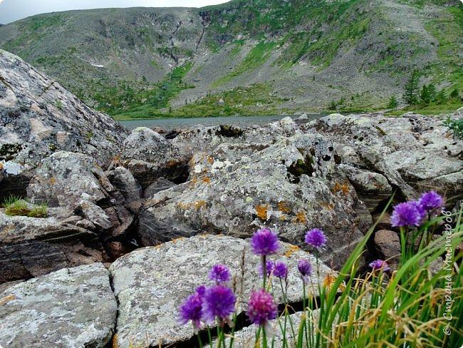 Это Иоанн Кронштадтский, святой праведник, сказал, что цветы – остатки рая на земле. И разве нельзя назвать райским местом этот родник в Бешпельтирском логу? У нас, в Горном Алтае, такая красота повсюду. И я приглашаю вас на неспешную прогулку по цветущему Алтаю. фото 84