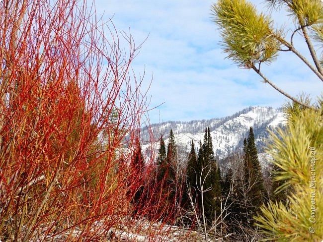 Это Иоанн Кронштадтский, святой праведник, сказал, что цветы – остатки рая на земле. И разве нельзя назвать райским местом этот родник в Бешпельтирском логу? У нас, в Горном Алтае, такая красота повсюду. И я приглашаю вас на неспешную прогулку по цветущему Алтаю. фото 17