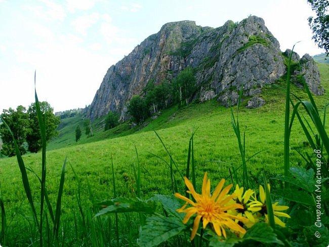 Это Иоанн Кронштадтский, святой праведник, сказал, что цветы – остатки рая на земле. И разве нельзя назвать райским местом этот родник в Бешпельтирском логу? У нас, в Горном Алтае, такая красота повсюду. И я приглашаю вас на неспешную прогулку по цветущему Алтаю. фото 73