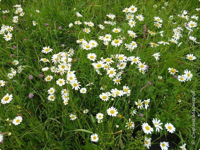 Это Иоанн Кронштадтский, святой праведник, сказал, что цветы – остатки рая на земле. И разве нельзя назвать райским местом этот родник в Бешпельтирском логу? У нас, в Горном Алтае, такая красота повсюду. И я приглашаю вас на неспешную прогулку по цветущему Алтаю. фото 99