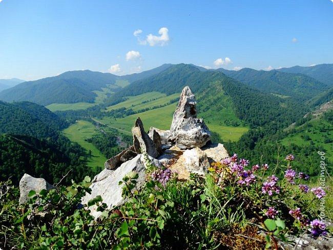 Это Иоанн Кронштадтский, святой праведник, сказал, что цветы – остатки рая на земле. И разве нельзя назвать райским местом этот родник в Бешпельтирском логу? У нас, в Горном Алтае, такая красота повсюду. И я приглашаю вас на неспешную прогулку по цветущему Алтаю. фото 71