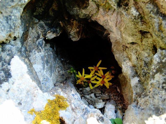 Это Иоанн Кронштадтский, святой праведник, сказал, что цветы – остатки рая на земле. И разве нельзя назвать райским местом этот родник в Бешпельтирском логу? У нас, в Горном Алтае, такая красота повсюду. И я приглашаю вас на неспешную прогулку по цветущему Алтаю. фото 81