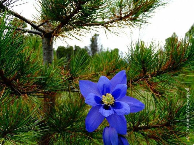 Это Иоанн Кронштадтский, святой праведник, сказал, что цветы – остатки рая на земле. И разве нельзя назвать райским местом этот родник в Бешпельтирском логу? У нас, в Горном Алтае, такая красота повсюду. И я приглашаю вас на неспешную прогулку по цветущему Алтаю. фото 74